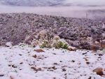 Arizona Snow by CoJack-CuZtoms