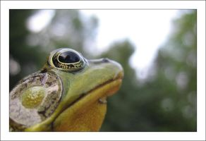 Ribbit 2 by MichelleMarie