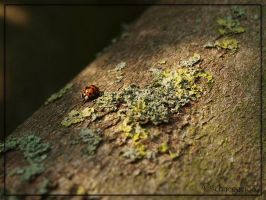 Ladybug 04 by schnegge1984