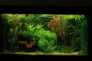 my aquarium by schaduwvacht
