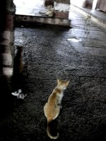 Cats in the Temple by samarinda