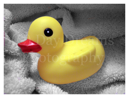 Rubber Duckie by DayDreamsPhotography