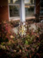 Day Seventy-Four WARNING CONTAINS SPIDERS! by mandeax