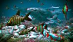 Anaglyph Whales by passionofagoddess