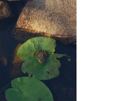 reminescences of a frog by ThatPhotograph
