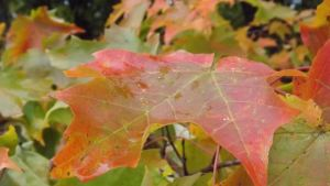 A Day at Mille Lacs 072 - Fall Colors by DarlingChristie