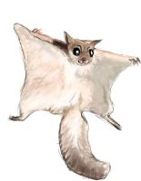 Random Flying Squirrel by grievous15