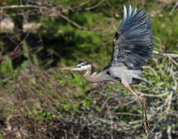 GBH In Flight by flowerhippie22