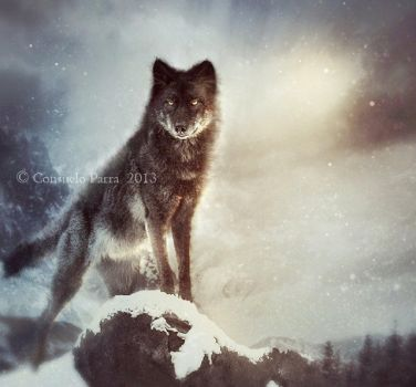 The Wolf Tales by Aeternum-designs