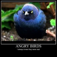 Angry Birds Desmotivational by keternaruto