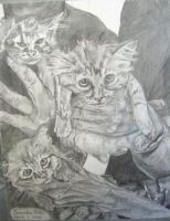 Young Kittens for Old People by Ballerinatwin3