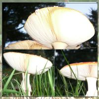 Stock images - Mushroom Collection 05 by M10tje