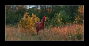Horse in sunrise by Seffis