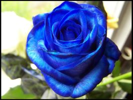 Blue rose by L-a-y-l-a
