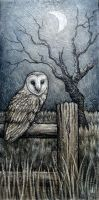 Barn Owl 1 by shmeeden