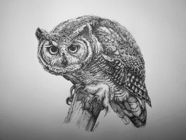 Great horned owl by Concini