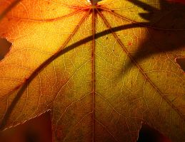 The color of autumn by Milie-Photography