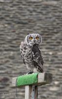 Baby Owl by MademoiselleOrtie