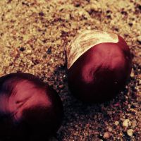 Les marrons by Lylly55