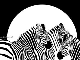 Zebras by M-Willander