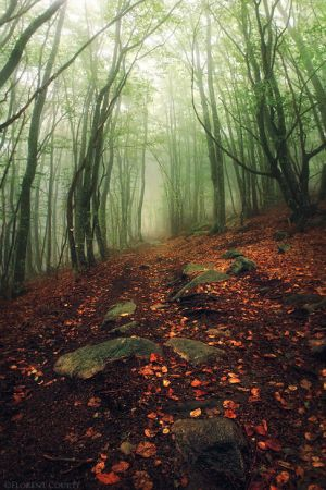 Autumn Rain by FlorentCourty