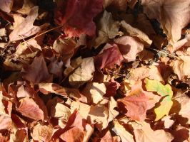 Leaf Pile with Shadow by RosalineStock