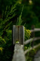 Around the fencepost. by JeffreyDobbs