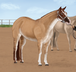 Dilute halter show entry by Wild-Rose-Ranch