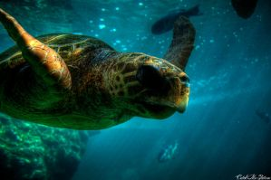 tortue by CatchMePictures
