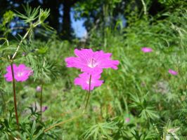 pink flower 2 by florina23