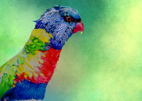 The parrot by loenabelle