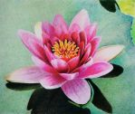 Water lily - Prismacolor Colored pencil - layering by f-a-d-i-l