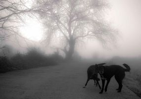 Dog in the fog by fanbes
