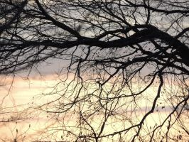 Sunset Tree Branches by LilyBlight