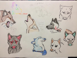 Wolf Head Sketches by IgeWolf