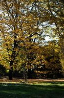 An Autumn day in Forli XI by SilvieTepes