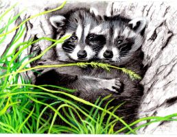 Hold Me Tight 'Racoons' by CassAllsworth