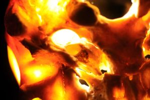 Human Skull macro near acustic meatus by Meddling-With-Nature