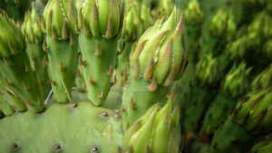 Prickles by Wolfpack5554