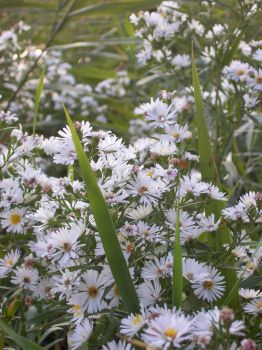 White Flowers by Angel-Escondida