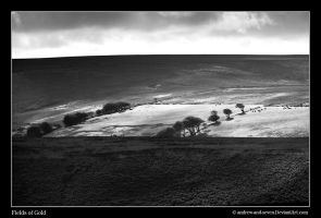 Exmoor's Fields of Gold by Andrew-and-Seven