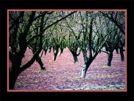 Blood Shed in the Orchard by jeepprincess