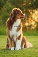 love this bokeh by Partridge-PetPics