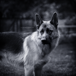 My Dog Again... by DREAMCA7CHER