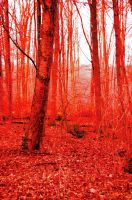 Blood Forest II by Cruzio