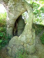 Hollow oak by Astrocat