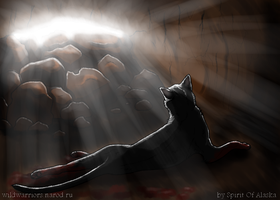 Hollyleaf's Story. Ch. I by Spirit-Of-Alaska