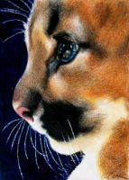 Wild Kitten, Cougar kitten colored pencil drawing by crystalcookart