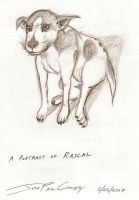 A Portrait of Rascal by ryuuseipro