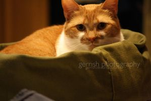 118 - Pippin's Bed by gerrish